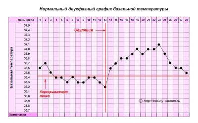 Базальна температура при овуляції