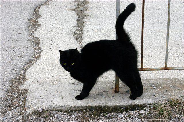 Що робити, якщо не щастить по життю, або як обійти чорного кота?