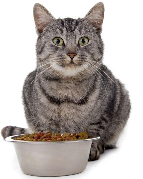 Який корм краще для кішок?