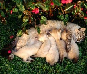 Годує кішка: догляд, годування