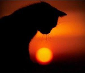 Кішка вмирає: коли варто приспати стару кішку?