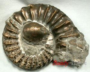 Мінерал амоніт. Властивості каменю амоніт. Опис амоніту