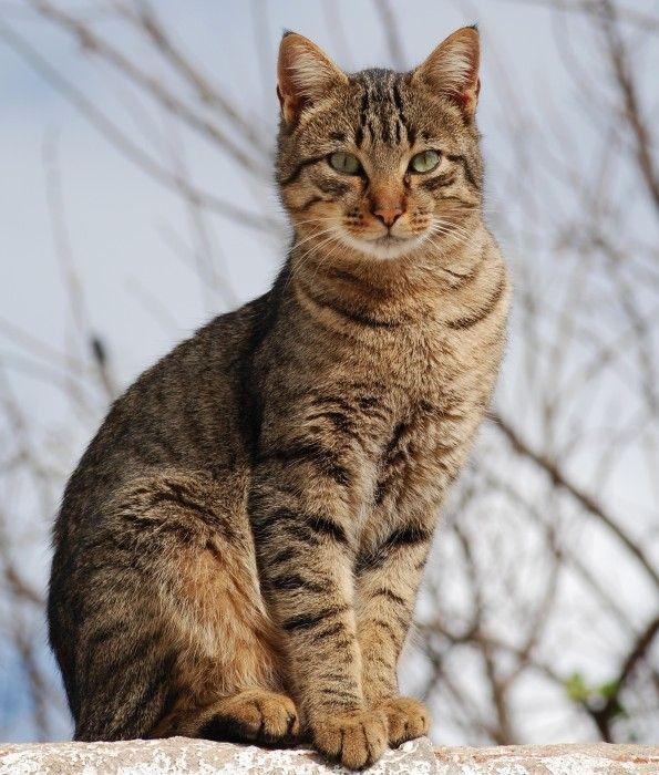 Літня кішка: особливості догляду