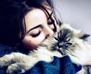 Чи існують лікувальні кішки?