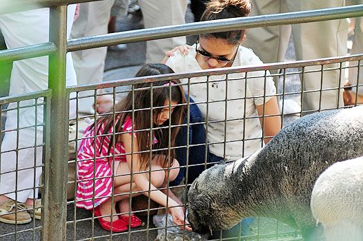 У світі тварин: кеті холмс і сурі в зоопарку