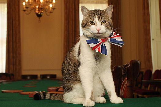 У відставку: кота ларрі звільнили з резиденції британського прем'єра